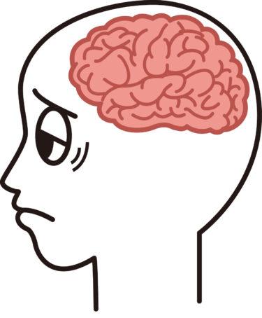 記憶力低下を防ぐには、脳の乾燥を防ぐ水分補給と軽運動がポイントです